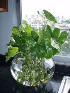 Gwak Nguen In Gl Jar Beside Window Water Plants Indoor Office Best