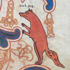 Ca. 1072 Fox