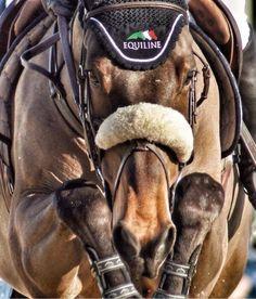 """fkuribrena: """" The winning knees of #Laura #Kraut's horse! """""""