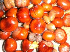 Sparkly clean conkers - great for looking closely at found objects and fantastic addition  to water play too!