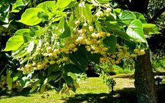 Fruit, Creative, Garden, Wordpress, Trees, Google, Medicine, Fragrance, Garten