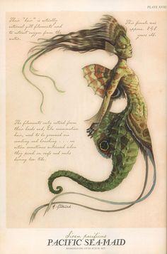 Pacific Sea-Maid (Mermaid)