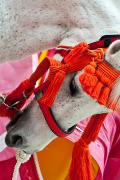Sacred horse, in Aoi Matsuri (means Hollyhock festival, it's one of the three major festivals in Kyoto, Japan)