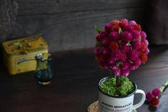 花々からドライフラワーへ♪ センニチコウのトピアリーアレンジ : 窪田千紘フォトスタイリングWebマガジン「Klastyling」暮らす+スタイリング Raspberry, Fruit, Plants, Raspberries, Plant, Planets