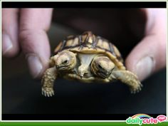 """""""this thing gets so annoying""""says the right turtle"""