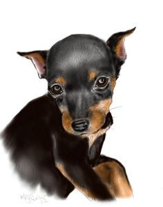 Miniature Pinscher Blank Note Cards by RKidsRDogs on Etsy, $8.00