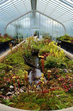 Aquaponics DIY Aquarium - Compared - Sensible Solutions Of Aquaponics Greenhouse - Appont
