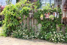素敵な発見がたくさん! 園芸ショップ探訪6 埼玉「フローラ黒田園芸」 – GardenStory (ガーデンストーリー) Garden Shop, Flora, Plants, Gardens, Outdoor Gardens, Plant, Garden, House Gardens, Planets