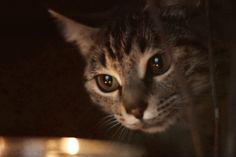 fine art photography, cat, candle