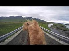 Íshestar - How to ride an Icelandic horse? - YouTube