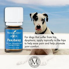 Did you know you can use Young Living Essential Oils (available at #MillsPharmacy) on pets, too? In honor of #NationalDogDay yesterday, we offer this pet-friendly holistic solution for joint pain. Young Living Essential Oils, Pharmacy, Apothecary, Dog Days, Did You Know, Knowing You, How To Apply, Pure Products, Pets