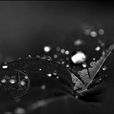 French Flower photography Dewdrops on leaf by UnAirDeParisByAlbane