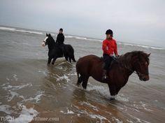 Paardrijden op Heavy Horses in Engelse Lake District #paardrijden #horses #paarden