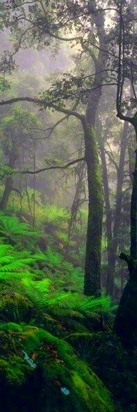 34 Ideas For Old Tree Photography Mists Peter Lik Photography, Tree Photography, Beautiful World, Beautiful Places, Beautiful Pictures, Beautiful Forest, Mystical Forest, Tree Forest, Forest Path