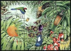 Taveuni Rainforest :