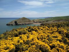 Valley View Cottages, West Wales. Pembrokeshire. Self Catering Cottages. #wales #visitwales #cottages #holiday #uk