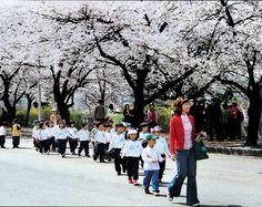 아이들과 벚꽃