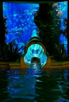 Water slide through Shark Tank at the Golden Nugget Hotel and Casino in Las Vegas, Nevada. Water slide through Shark Tank in Las Vegas Oh The Places You'll Go, Places To Travel, Places To Visit, Travel Destinations, Holiday Destinations, My Pool, Shark Tank, Adventure Is Out There, Dream Vacations