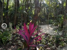 Jungle paths leading to the temazcal. Holistika Tulum. Tulum real estate.