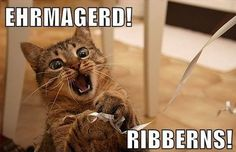 ... Memes 26 Ways Cats Gleefully and Shamelessly Annoy Humans – Angst Anarchy ...