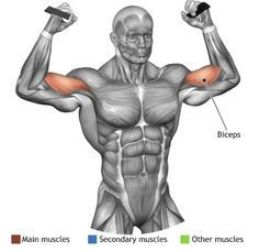 OVERHEAD CABLE CURL - The overhead cable curl is useful to train the biceps and in particular to stimulate the medial fibres and is therefore particular fit for the development of the biceps peak. Cable Workout, Gym Workout Tips, Biceps Workout, Fun Workouts, Men's Health Fitness, Muscle Fitness, Bodybuilding Nutrition, Bodybuilding Motivation, Muscle Building Tips