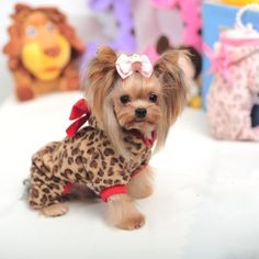 leg belt on sale at reasonable prices, buy Red Leopard Fleece Pet Small Dog Coat Dog Clothes for Yorkshire 2015 Cute Bow Dog Jumpsuits Winter Dog Clothing for Teddy from mobile site on Aliexpress Now! Yorkies, Yorkie Puppy, Teacup Puppies, Cute Puppies, Cute Dogs, Teacup Yorkie, Yorkshire Terriers, Yorkie Clothes, Small Dog Coats