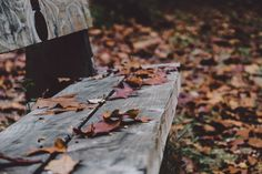 Public Domain Leaves Pictures - PublicDomainBox.com :http://www.publicdomainbox.com/public-domain-leaves-pictures-publicdomainbox-com-2/