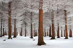 20 merveilleuses photographies de paysages enneigés qui vous donneront goût à l'hiver | Daily Geek Show