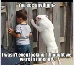 Here are some funny videos of funny dogs. Hope these funny dog videos will make you laugh. A funny dog always cheers me up. So check out these dog . Funny Shit, Funny Cute, Funny Kids, The Funny, Hilarious, Funny Stuff, Memes Humor, Funny Dog Memes, Funny Puppies