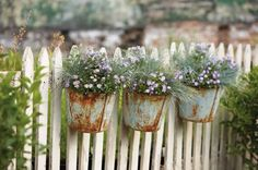 A trio of rusty-bucket planters mounted on a fence