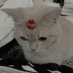 Poor little thing haha  //Circé