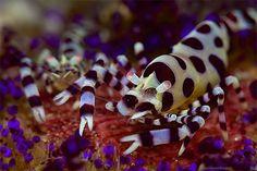Coleman's shrimp by Iyad Suleyman