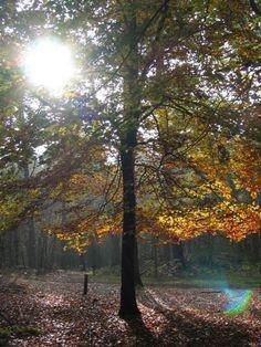 de Lage Vuursche in de herfst