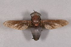 horsefly - Google Search