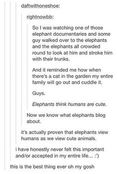 Humans are to elephants as cats are to humans