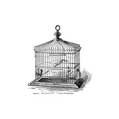 Birdcage Clipart ❤ liked on Polyvore featuring birds, birdcage, doodle and sketch
