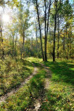 путь в лесу, автор varkushin на Яндекс.Фотках // Path in forest (Russia) by varkushin on fotki.yandex