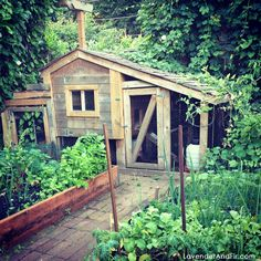Chickens in Urban Areas | ... bed, a garden shed, greenhouse and chicken coop in our garden area