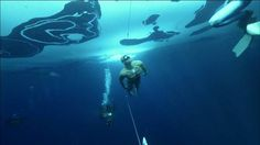 Swimmer sets record by spanning 250 feet beneath ice cover, in Speedos. Stig Severinsen spends his life testing the limits of the human body. Guinness Book, Guinness World, Deep Diving, Underwater Photographer, Humpback Whale, Navy Seals, World Records, How To Increase Energy, Breathe
