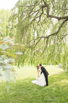 Bride and groom photos under a willow tree at a Skylands Manor wedding. Images by Mikkel Paige Photography, NJ wedding photographer.