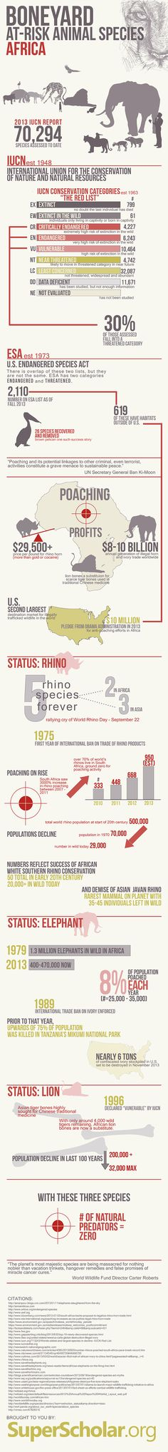 Boneyard At-Risk Animal Species Africa #Animal #Africa | #infographics repinned by @Piktochar