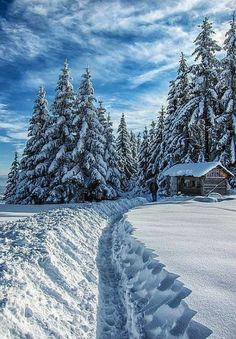 Winter Love, Winter Snow, Winter Christmas, Winter White, Christmas Trees, Beautiful World, Beautiful Places, Beautiful Scenery, Foto Picture