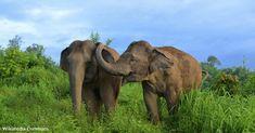 Elephant Camp, Asian Elephant, Elephant Family, Group Of Elephants, Save The Elephants, Circus Elephants, Ringling Bros Circus, Elephas Maximus, Rescue Puppies