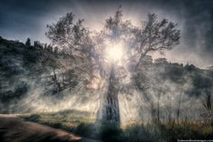 Tree of Life by Alexandros Maragos on 500px