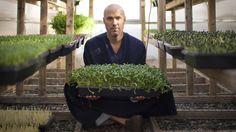Brendan Davison grows 11 kinds of microgreens, including arugula and basil, at his Good Water Farms in East Hampton, N.Y.