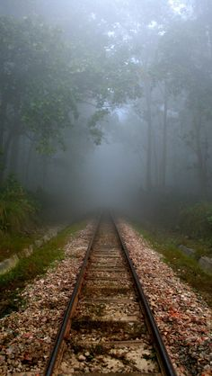 Train Times, Train Art, Train Pictures, Old Trains, Ferrat, All Nature, Train Tracks, Nature Pictures, The Great Outdoors
