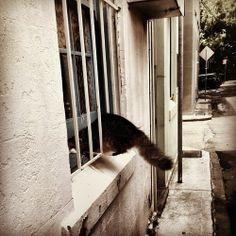 CAT BURGLAR  #cat #window #photo #steal #new)