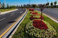 Small Garden Design, Begonia, Urban Landscape, Yard Landscaping, Landscape Architecture, Shrubs, Beautiful Flowers, Sidewalk, Gardening