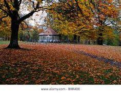 """Résultat de recherche d'images pour """"phoenix park dublin autumn"""""""