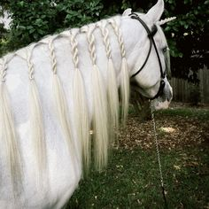 Noodle-Black Sheep Boogie *if starts to fall out, either scallop or make buns Noodle-Black Sheep Boogie *if starts to fall out, either scallop or make buns - Art Of Equitation Horse Mane Braids, Horse Hair Braiding, Braid Hair, Horses And Dogs, Show Horses, All The Pretty Horses, Beautiful Horses, Tail Braids, Horse Tail